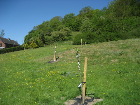 New orchard